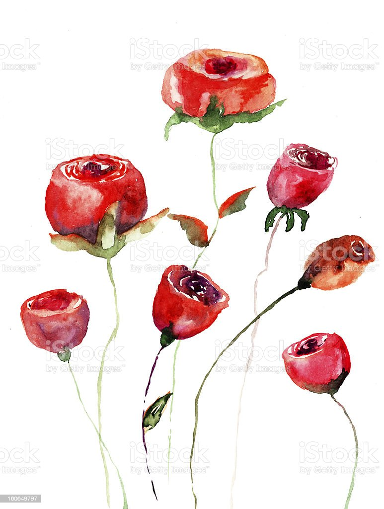 Roses flowers, watercolor illustration royalty-free stock vector art