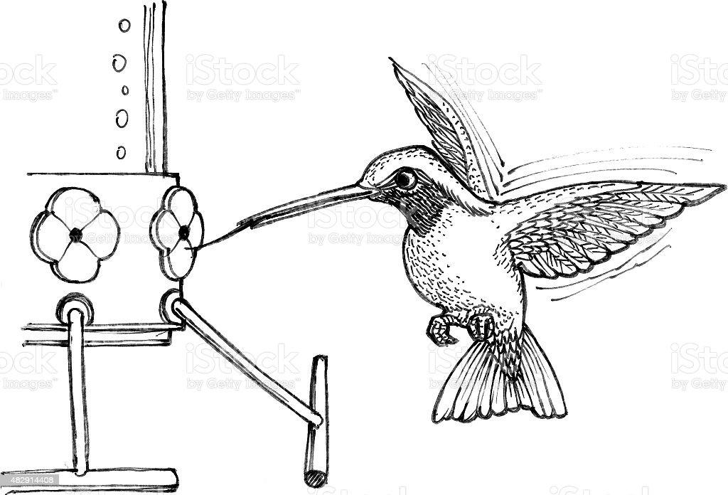 "Ruby-Throated Meetingraum ""Humming Bird"" Lizenzfreies vektor illustration"