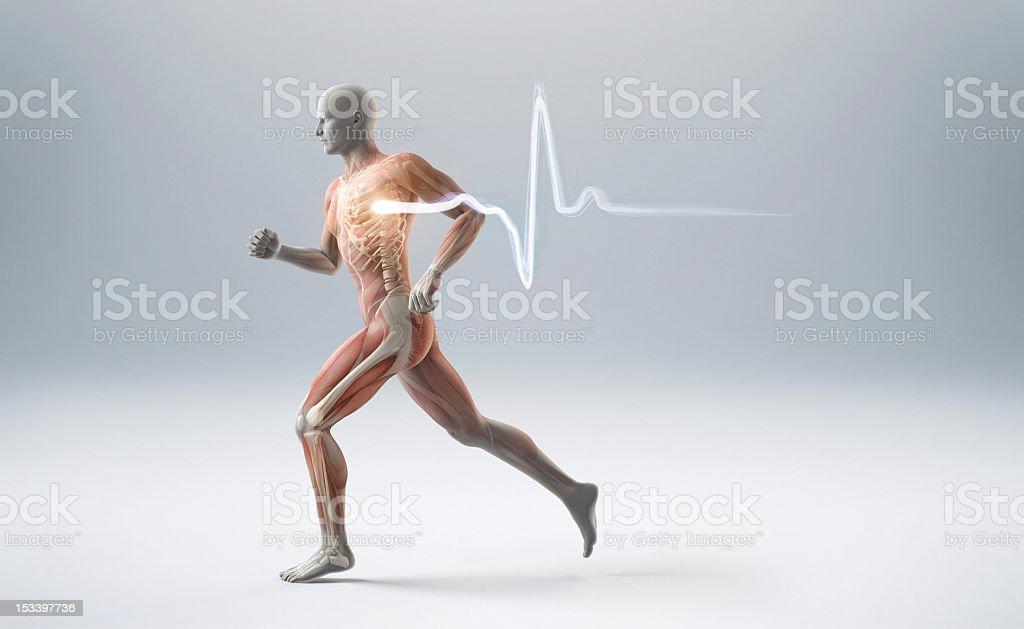Running muscle anatomy man vector art illustration