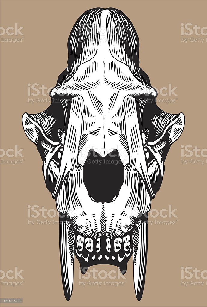 Saber Tooth Cat Skull royalty-free stock vector art