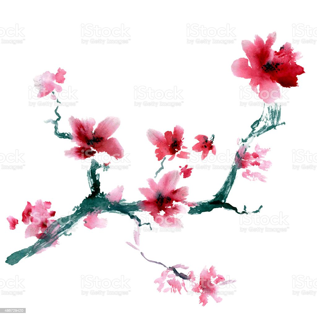 Sakura flower. vector art illustration