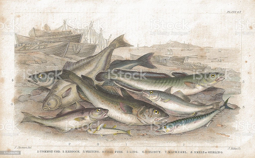 Salt Water Fish old lithographic print from 1852 vector art illustration