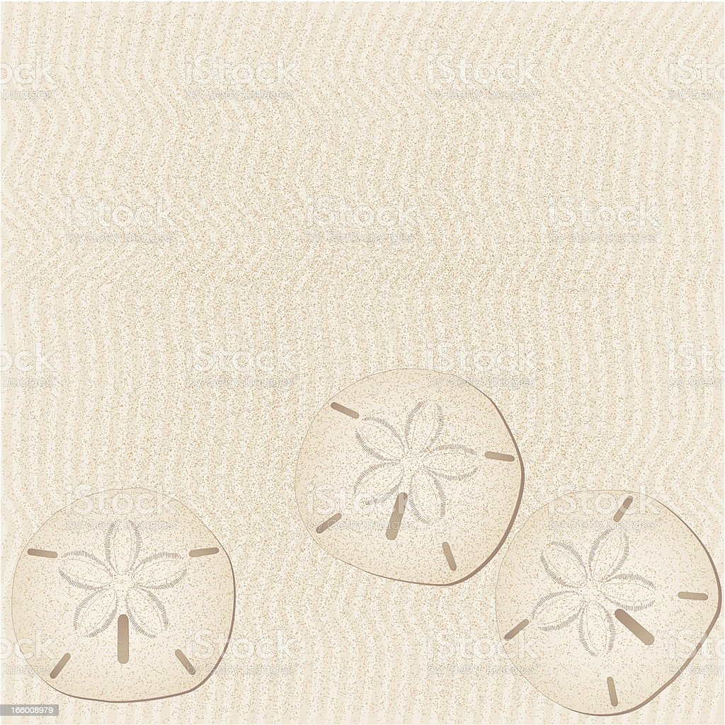 sand dollar background vector art illustration