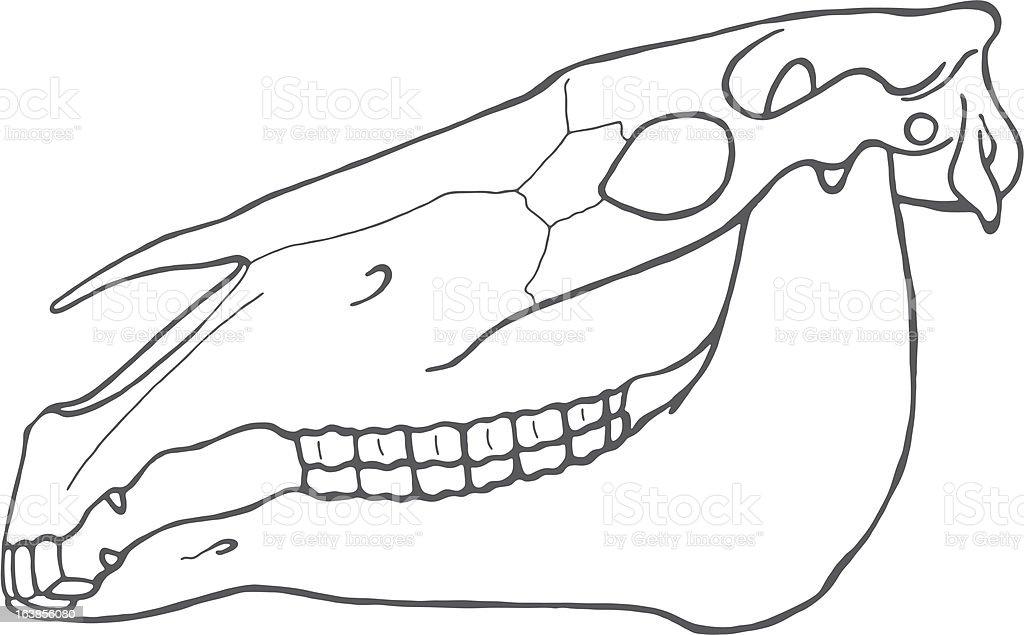 Schädel Pferd vector art illustration