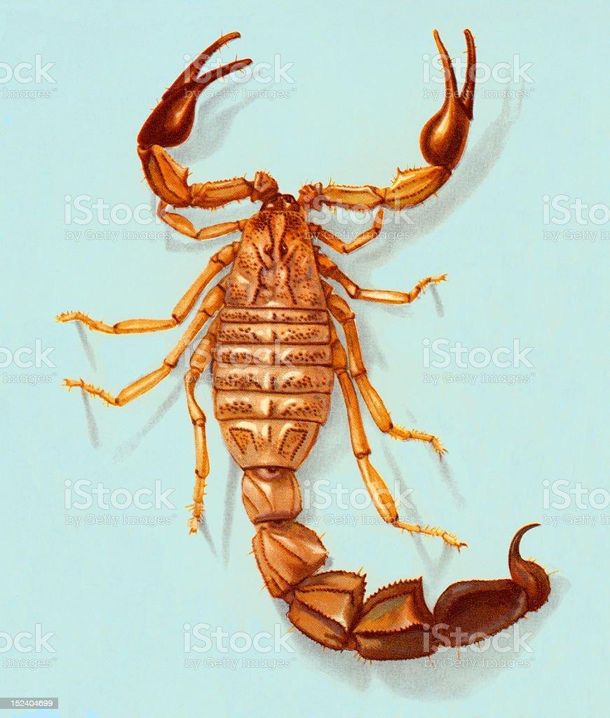 Scorpion royalty-free stock vector art