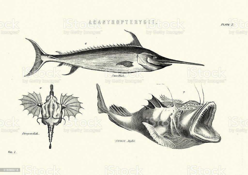 Sea Life - Swordfish, Dragonfish vector art illustration