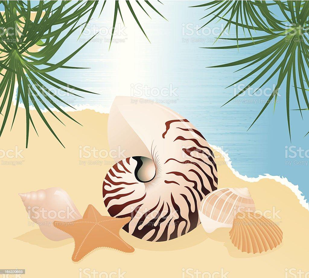 Sea shells on the beach under palm tree royalty-free stock vector art