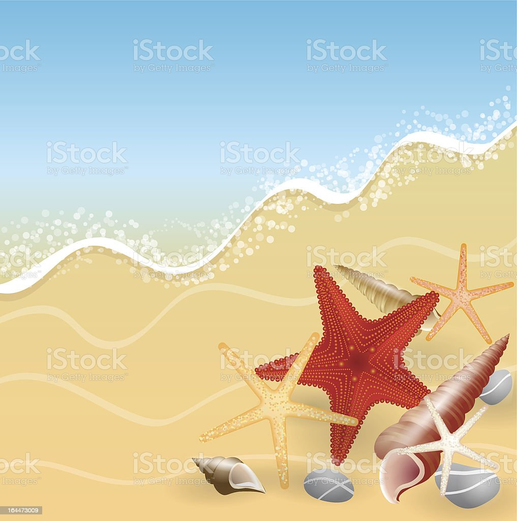 Sea shells on the sand royalty-free stock vector art