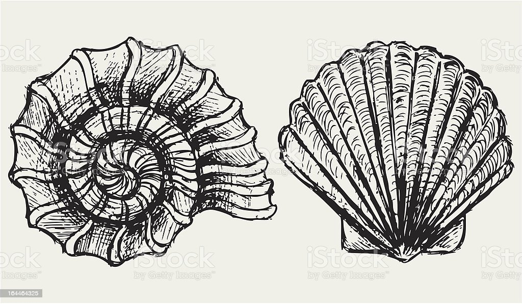 Sea snail and scallop shell vector art illustration