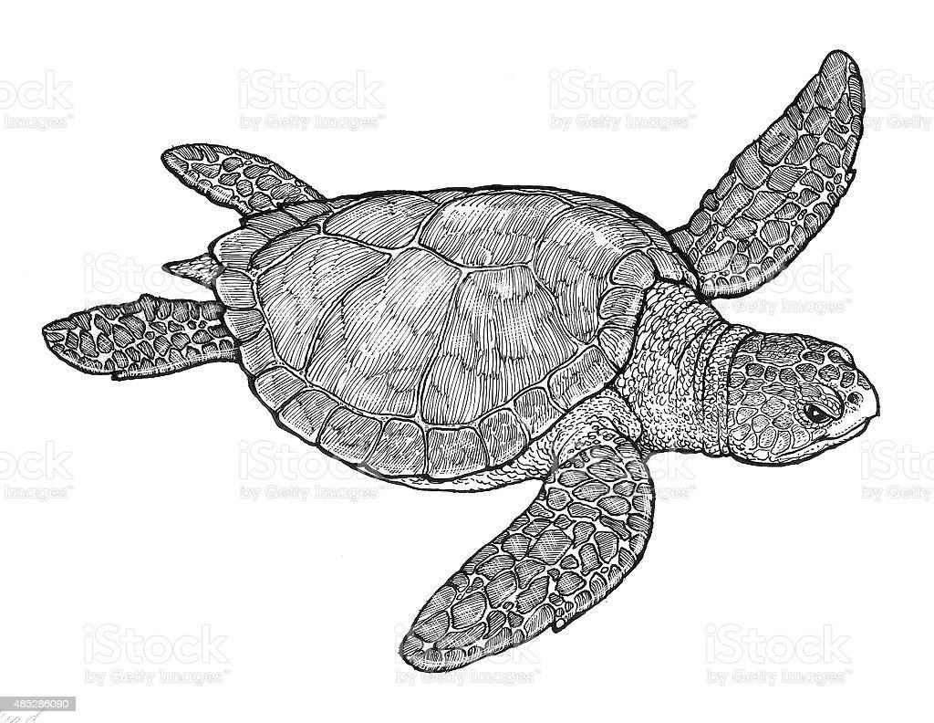 Meeresschildkröte Lizenzfreies vektor illustration