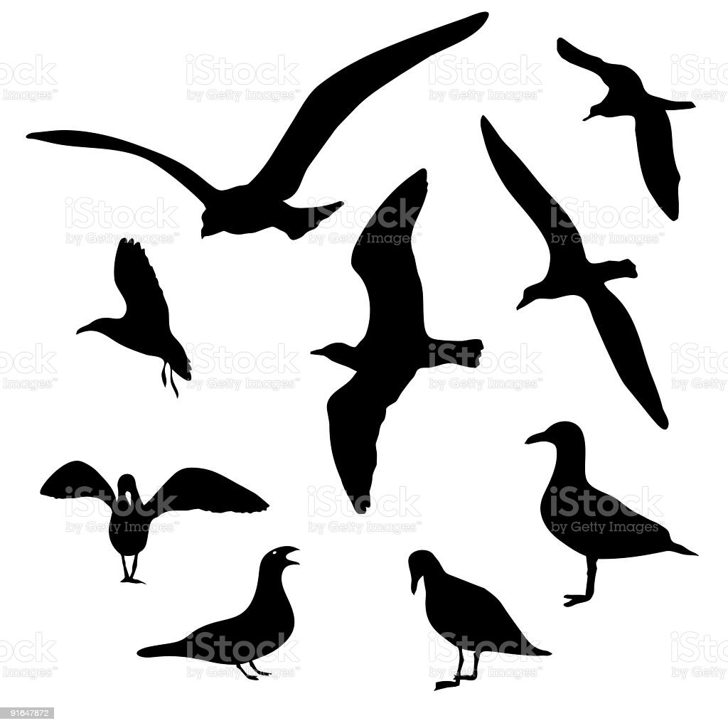 Seagull Collection royalty-free stock vector art