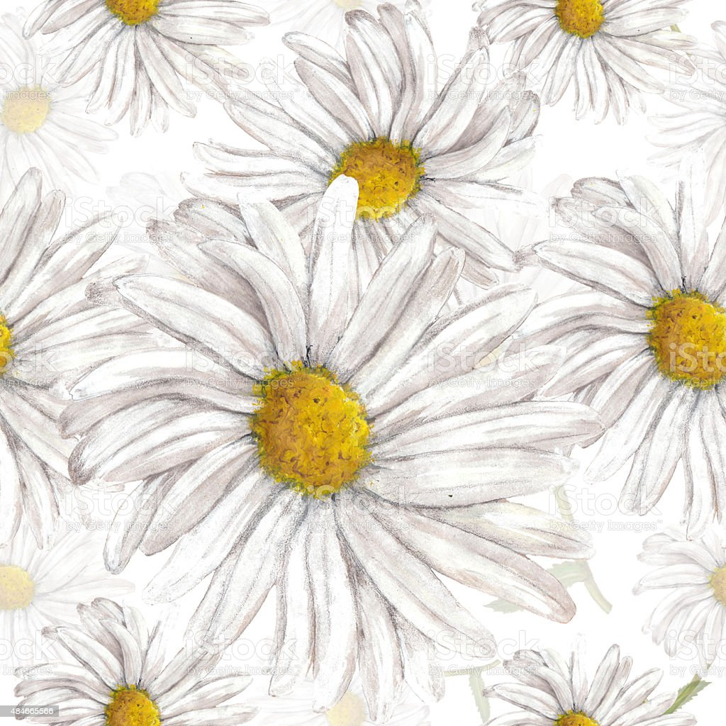 Seamless pattern of chamomile vector art illustration