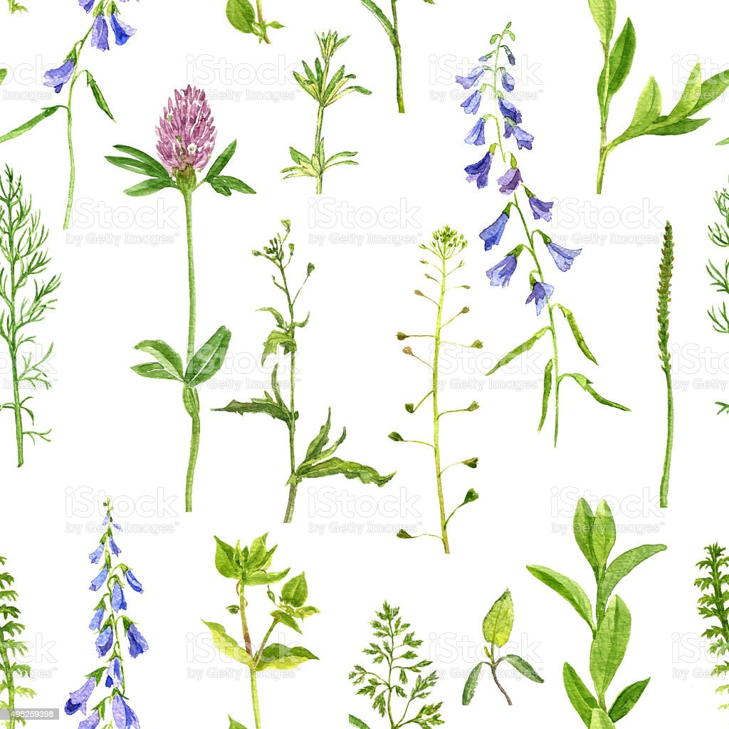 seamless pattern with herbs and flowers vector art illustration