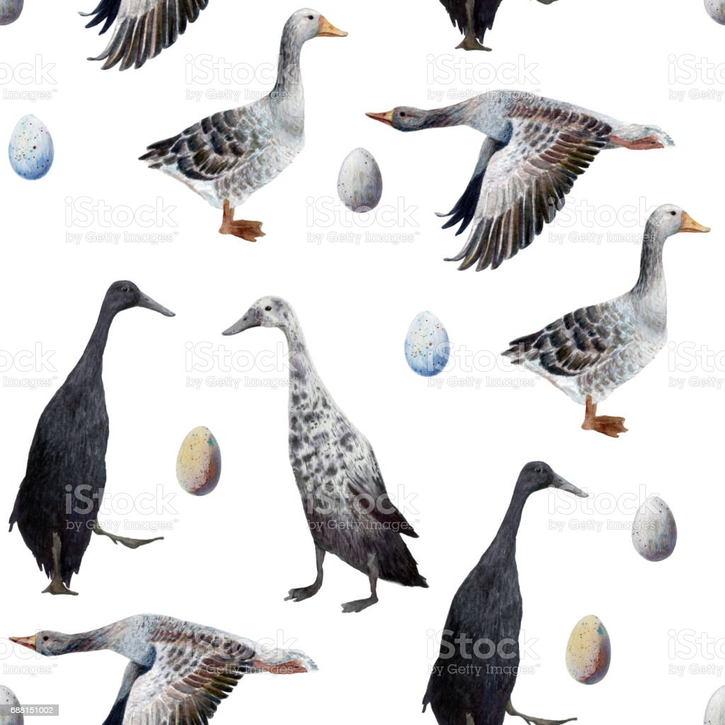 Seamless watercolor  pattern with different species of geese, ducks and eggs. vector art illustration