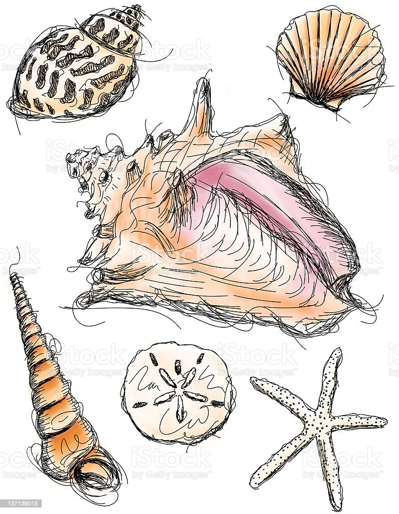 Seashell Sketches vector art illustration