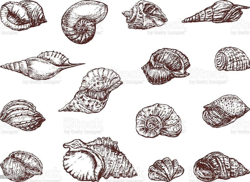 Seashells royalty-free stock vector art