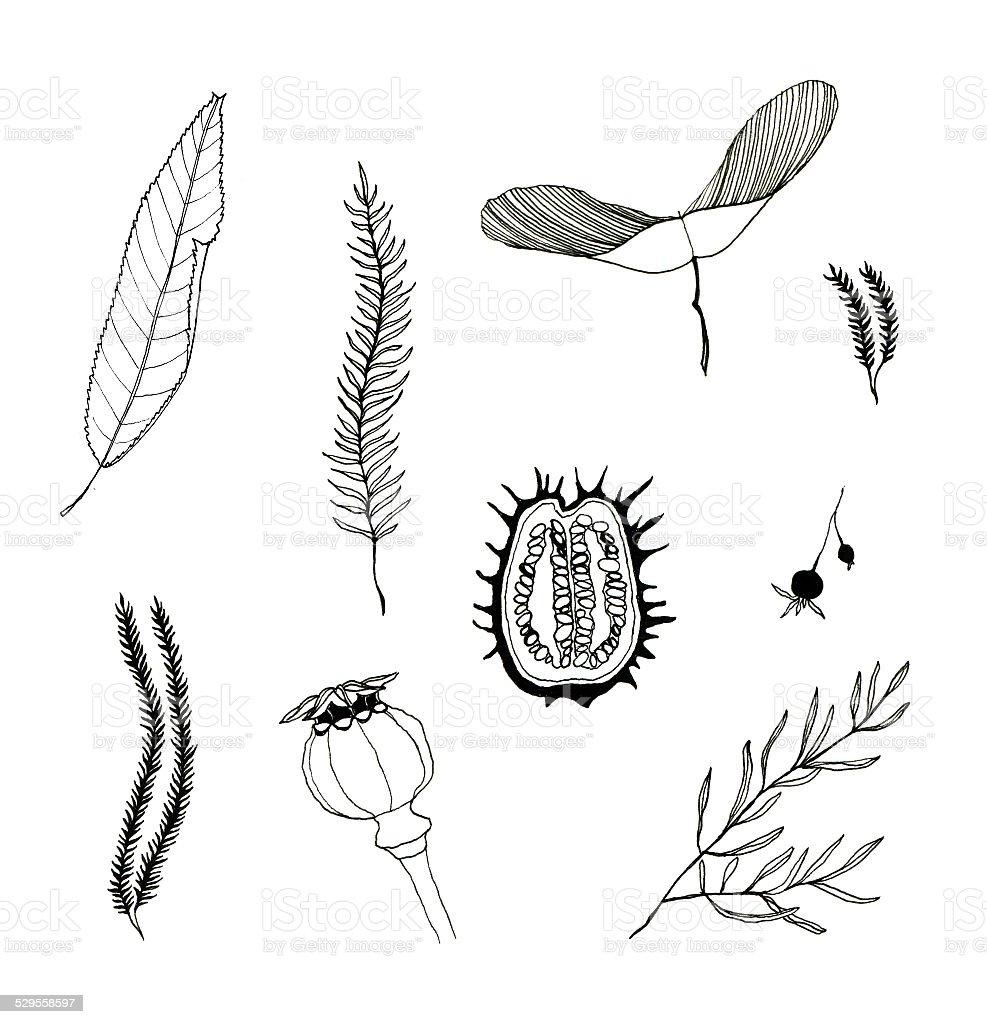 Seeds and leaves set vector art illustration