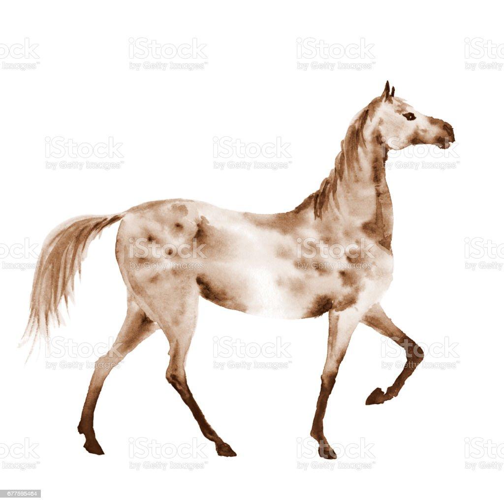 Sepia watercolor dapple grey horse. vector art illustration