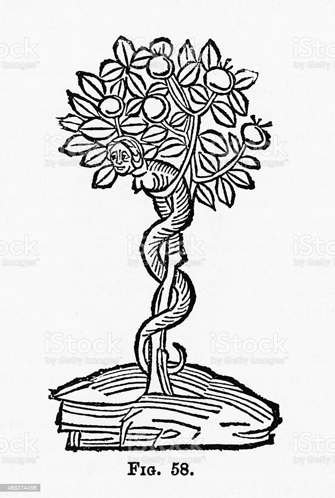 Serpent in the Apple Tree Christian Symbolism Engraving vector art illustration