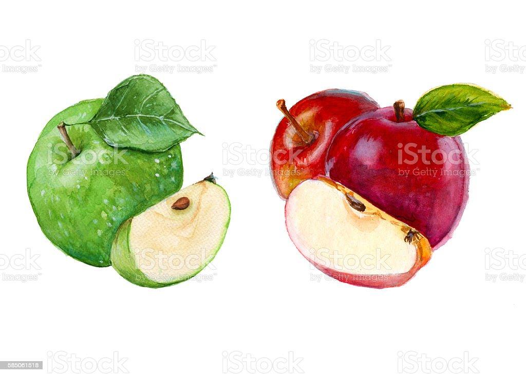 set apple. isolated. watercolor illustration vector art illustration