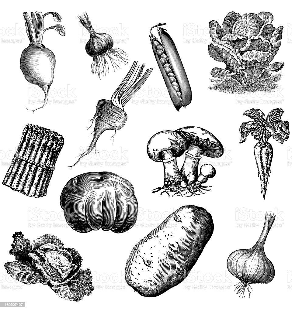Set of 12 Vegetables vector art illustration