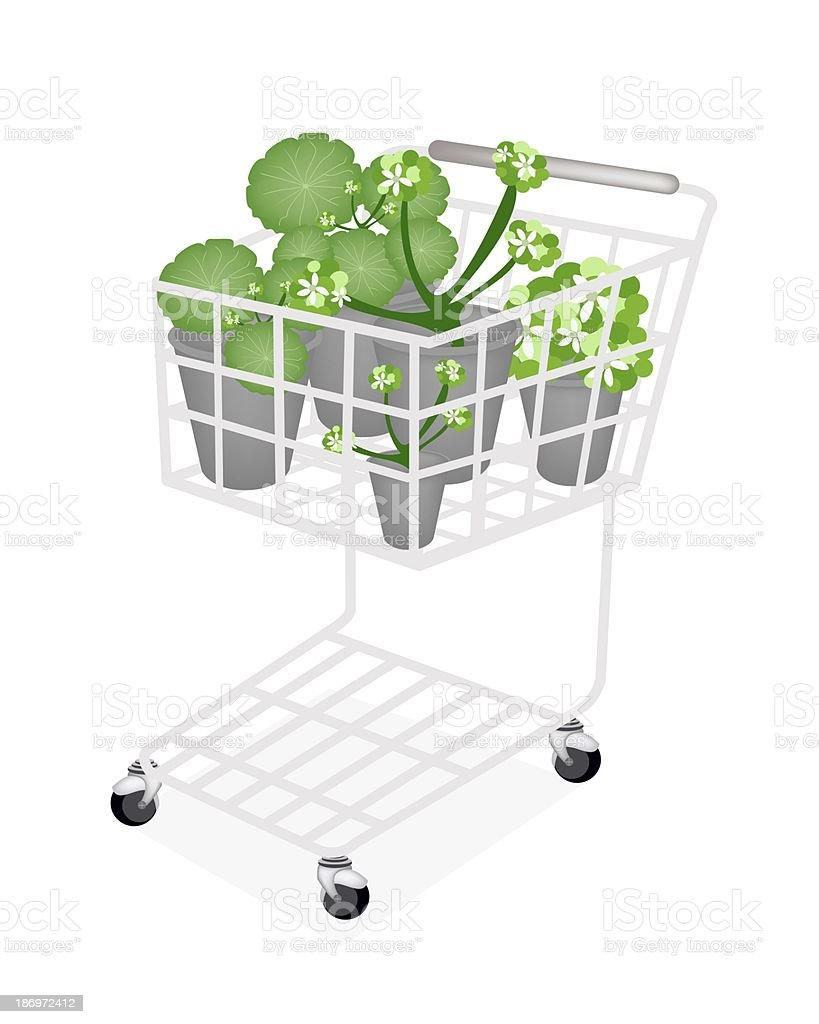Set of Asiatic Pennywort in A Shopping Cart vector art illustration