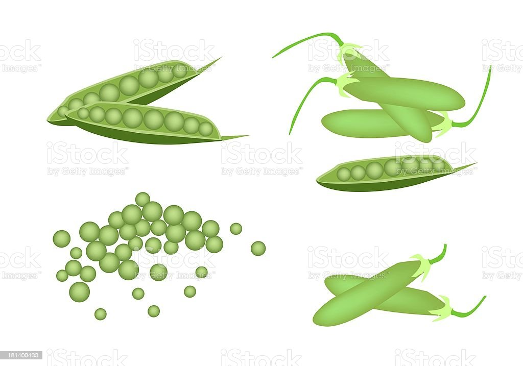 Set of Delicious Sweet Green Pea vector art illustration