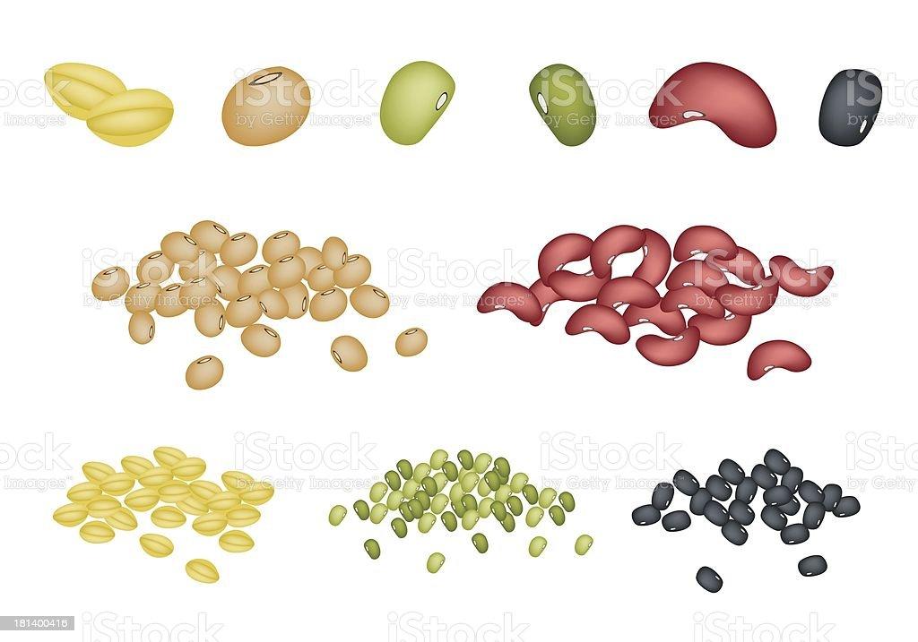 Set of Different Beans on White Background vector art illustration