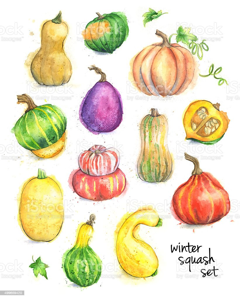Set of Different Types of Squash Painted in Watercolor vector art illustration