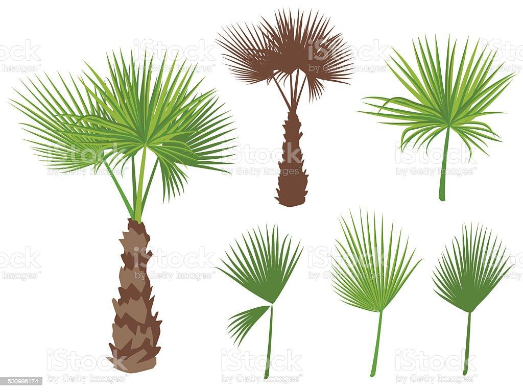 Set of fan palm round leaves. Fan Palm Tree vector art illustration