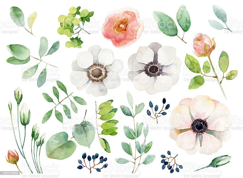 Set of floral elements on white background vector art illustration