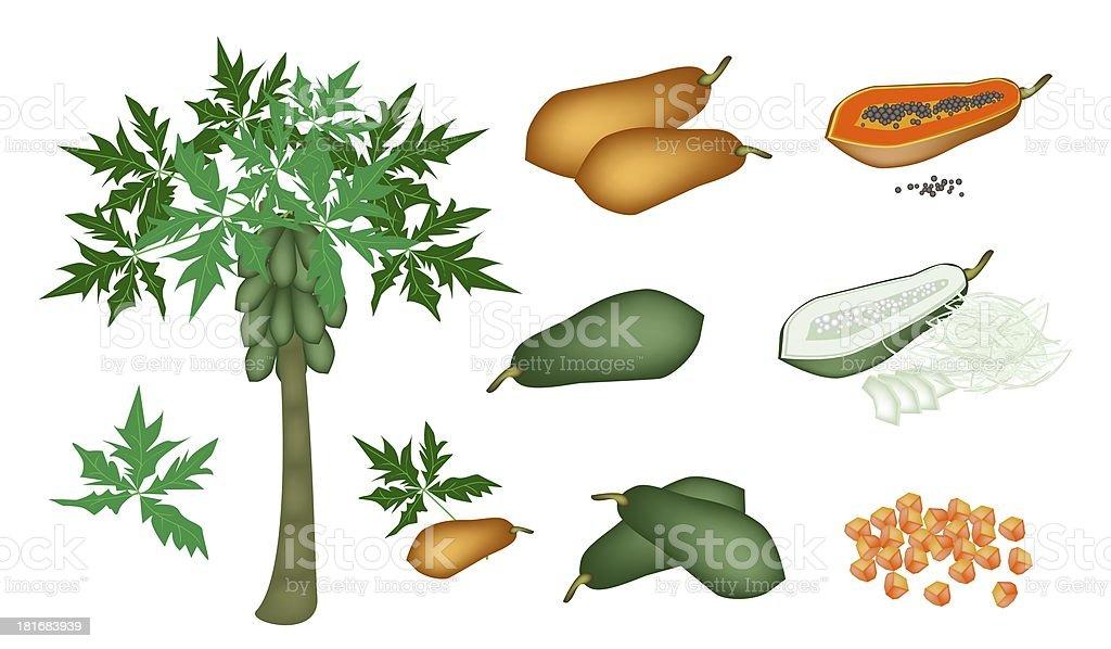 Set of Fresh Papayas and Papaya Tree royalty-free stock vector art