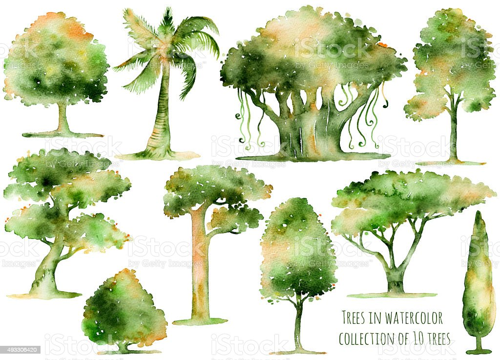Set of hand drawn watercolor trees. vector art illustration