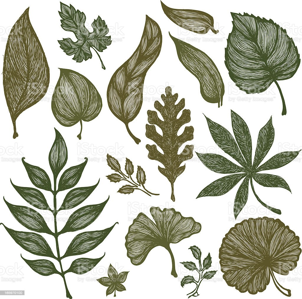 Set of Hand-Drawn Sketchy Leaves royalty-free stock vector art
