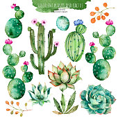 Set of high quality hand painted watercolor succulent and cactus