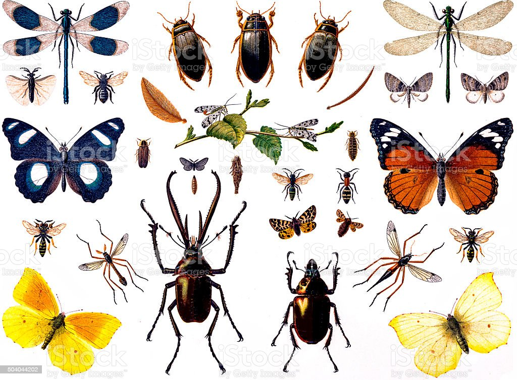 Set of insects vector art illustration