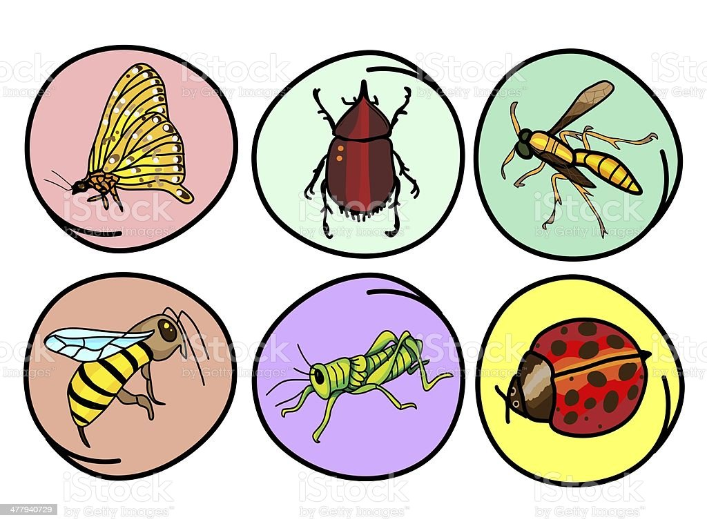 Set of Insects on Round Background royalty-free stock vector art