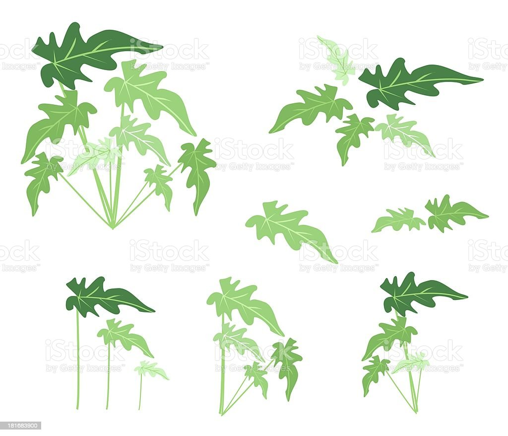 Set of Philodendron Leaves on White Background royalty-free stock vector art