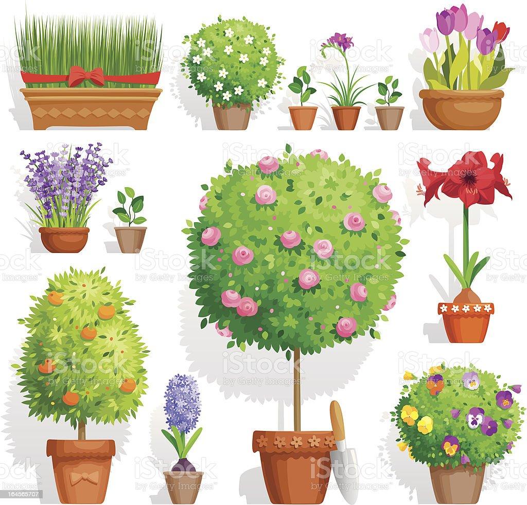 Set of pot plants vector art illustration