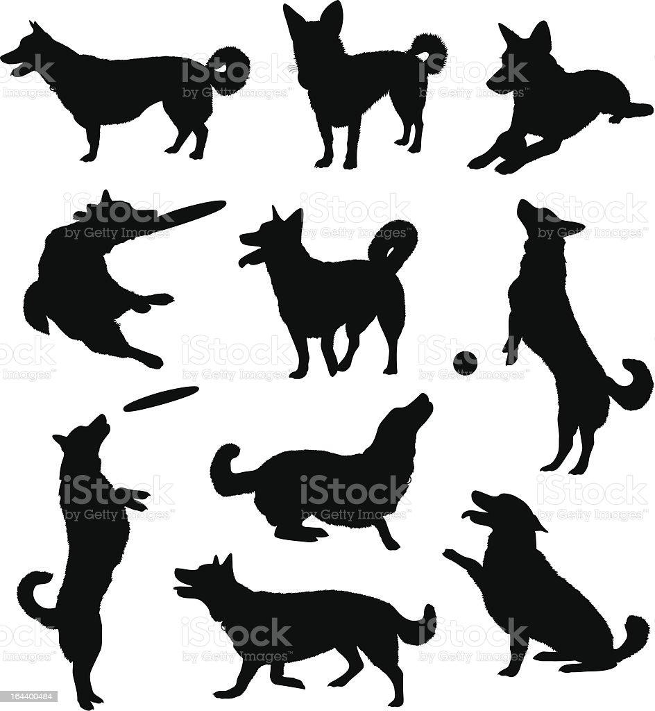 Set of ten black silhouetted dogs vector art illustration