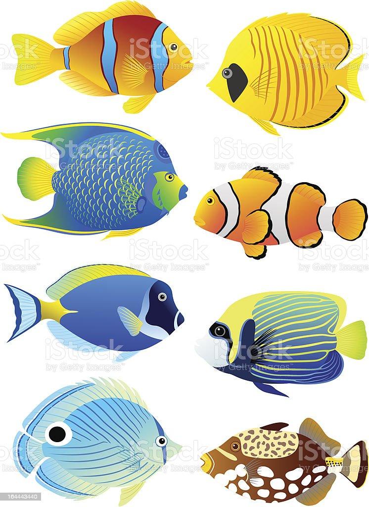 Set of tropical fish vector art illustration