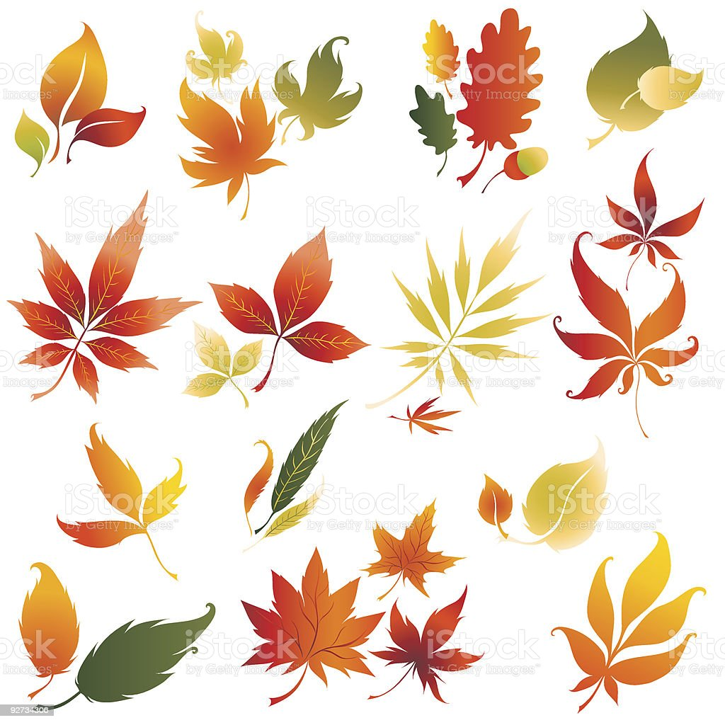 Set of vector autumn leafs  2 royalty-free stock vector art