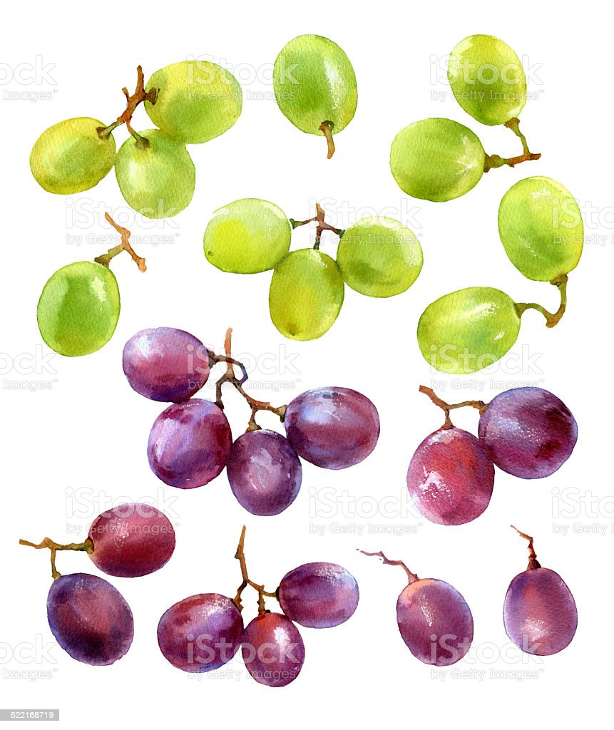 set of watercolor grapes vector art illustration