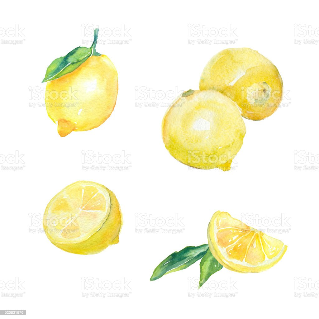 Set of watercolor lemons. vector art illustration