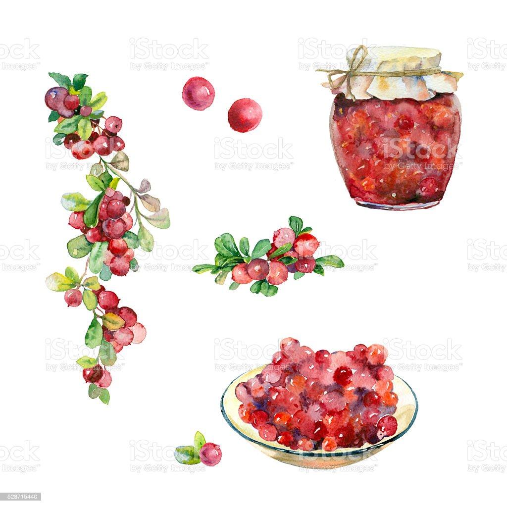 Set of watercolor red berries. vector art illustration