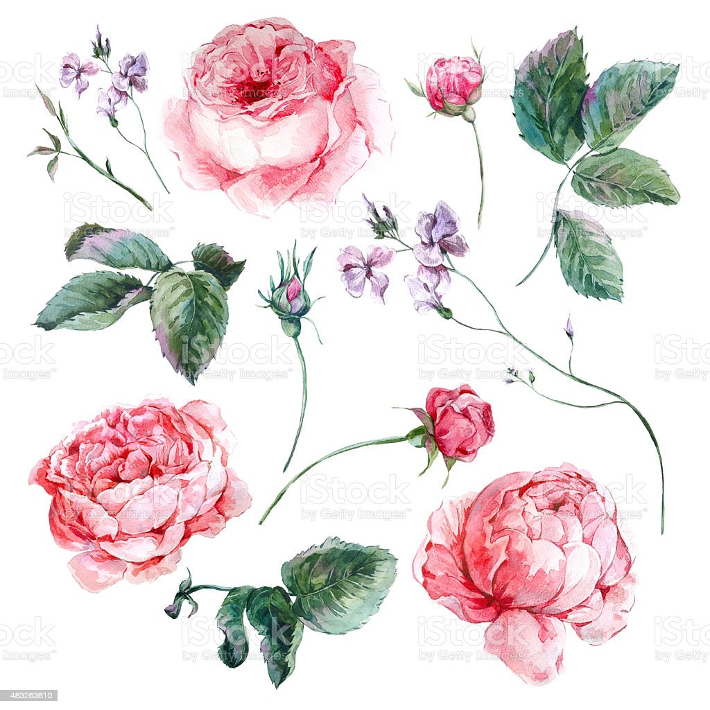 Set vintage watercolor bouquet of roses leaves branches flowers bouquet flower painted image plant rose flower dhlflorist Images