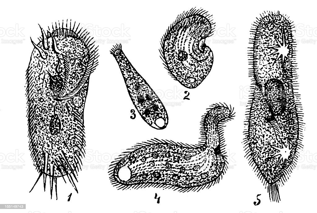 Several Protozoa vector art illustration