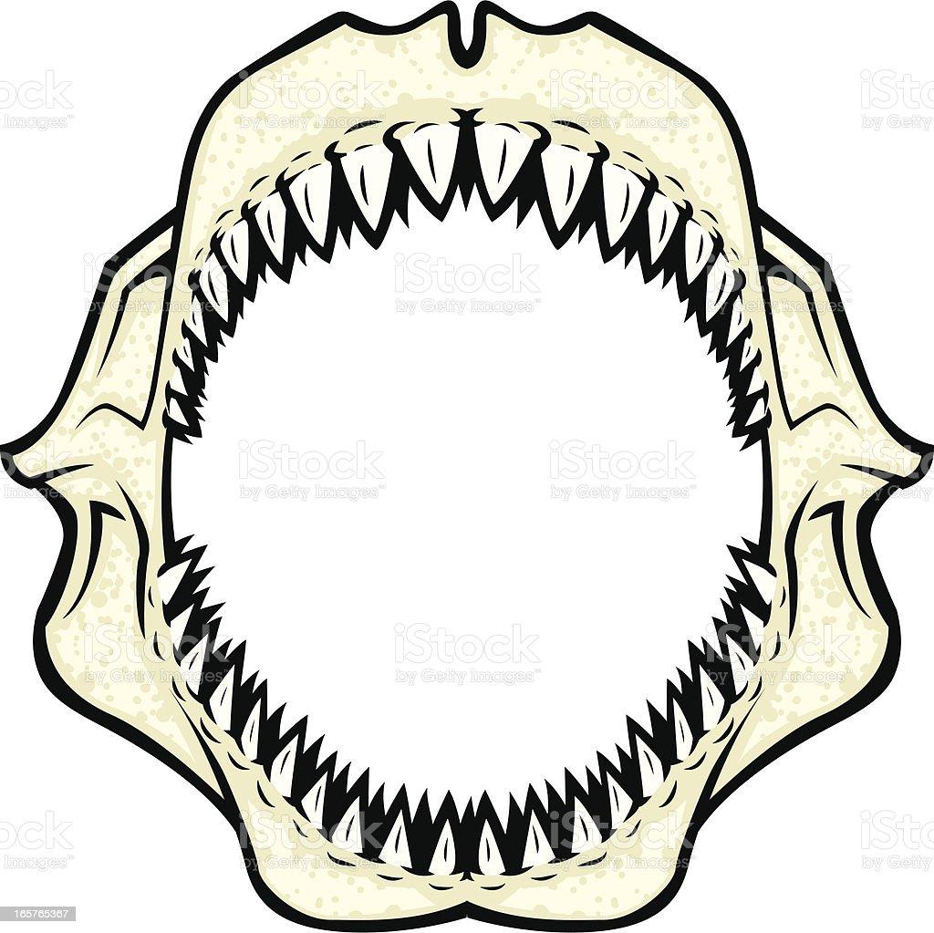 shark jaws vector art illustration