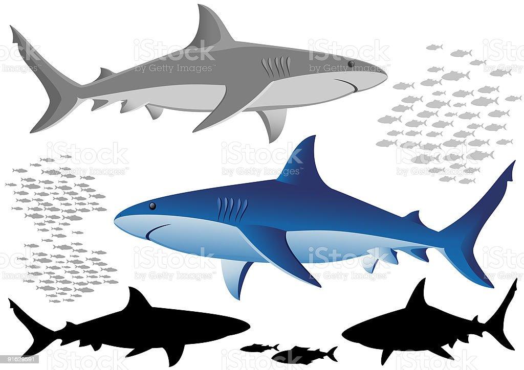 Sharks and fish vector art illustration