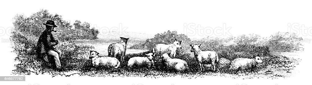 Shepherd minding his flock of sheep vector art illustration